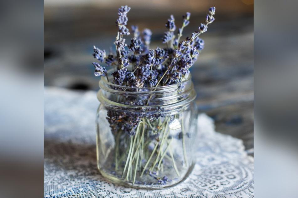 Lavendel soll durch seinen intensiven Duft Lebensmittelmotten vertreiben.