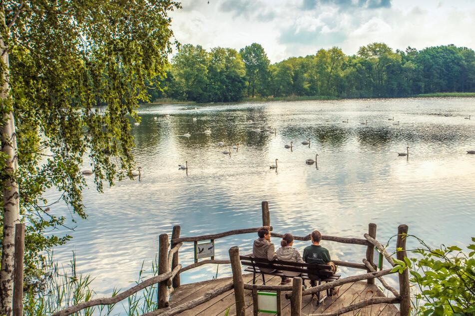 Die Oberlausitzer Heide- und Teichlandschaft ist das größte zusammenhängende Teichgebiet in Deutschland.