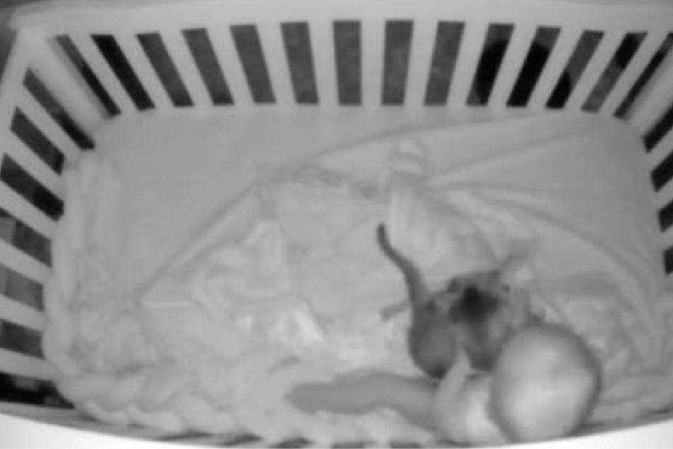 Als das Kind aufwacht, schnappt es sich das Tier und kuschelt mit ihm.