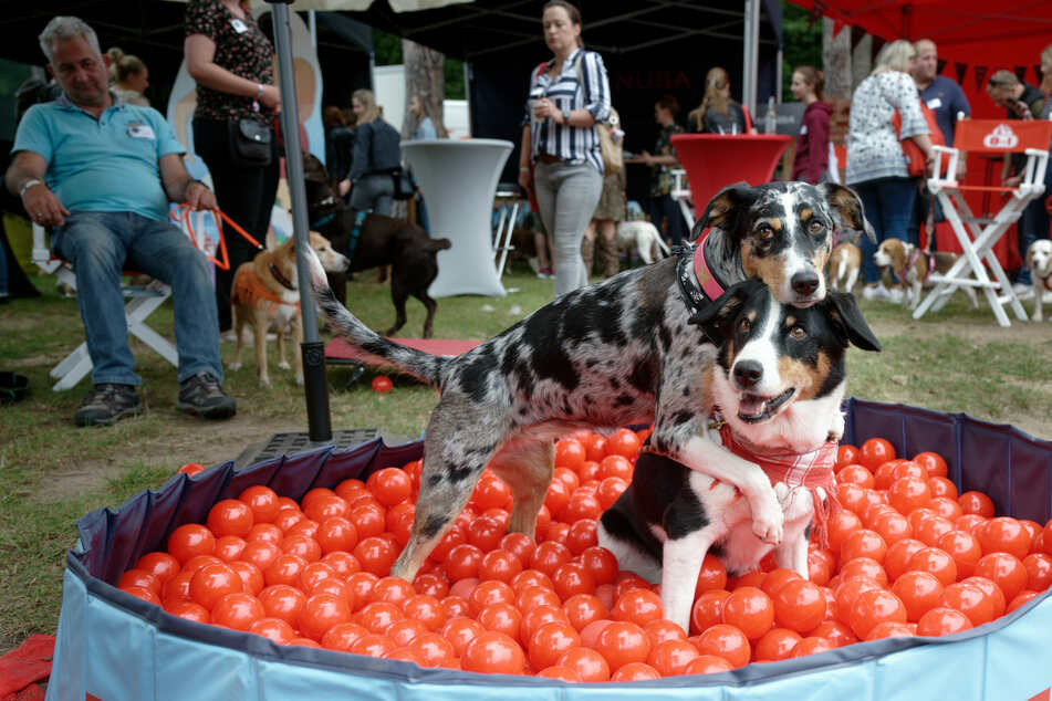 """Zwei Hunde spielen bei den """"German Petfluencer Awards"""" in einem Bällebad."""