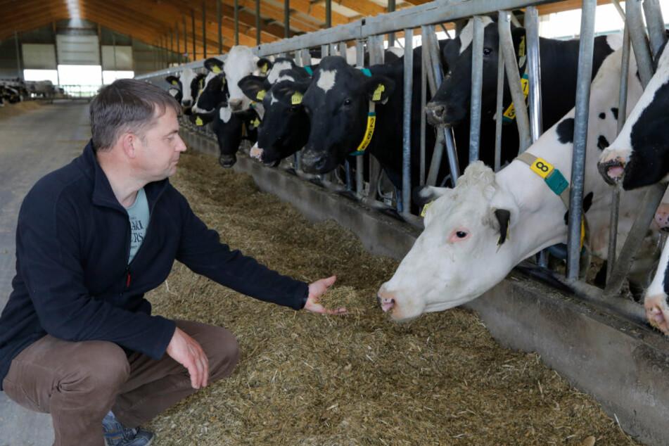 Chemnitz: Kein Wasser im Viehbetrieb: Feuerwehr muss hunderte Kühe retten
