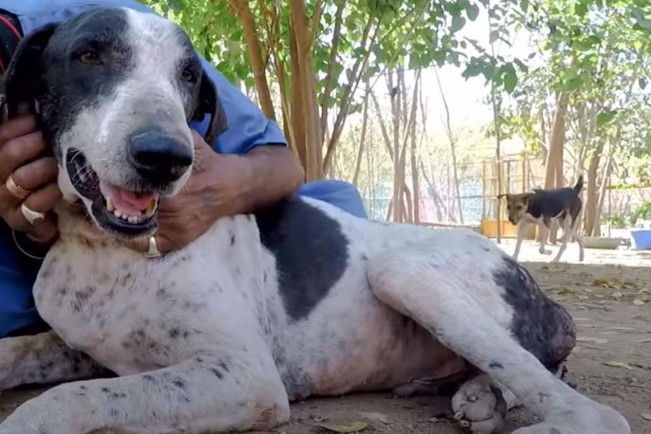 Ist das Ramu? Ja, der Hund hat eine unglaubliche Verwandlung hingelegt.