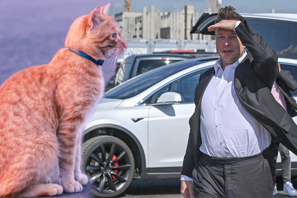 Britney Spears' Schwester beschuldigt Elon Musk, Tesla sei Schuld am Tod ihrer Katzen