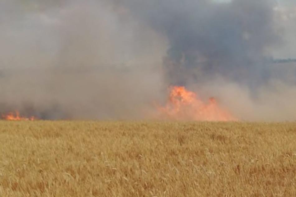 Brand durch Lagerfeuer: Großer Feuerwehreinsatz nahe Leipzig