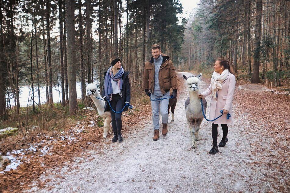 Niko (30) unternimmt mit Stephie (25, l.) und Karina (24) einen vergnüglichen Alpaka-Spaziergang.