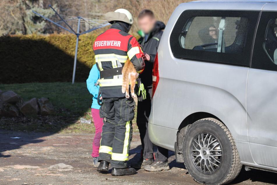 Die Feuerwehr konnte noch eine Katze aus dem Haus retten.