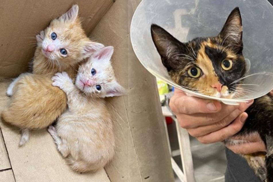 So wurden ausgesetzte Kätzchen für eine Mieze zum echten Glücksfall