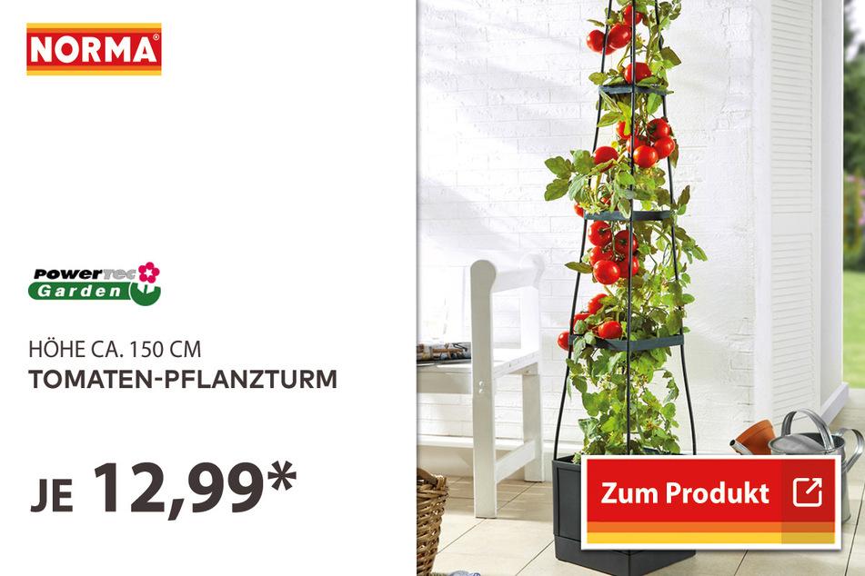 Tomaten-Pflanzturm für 12,99 Euro.