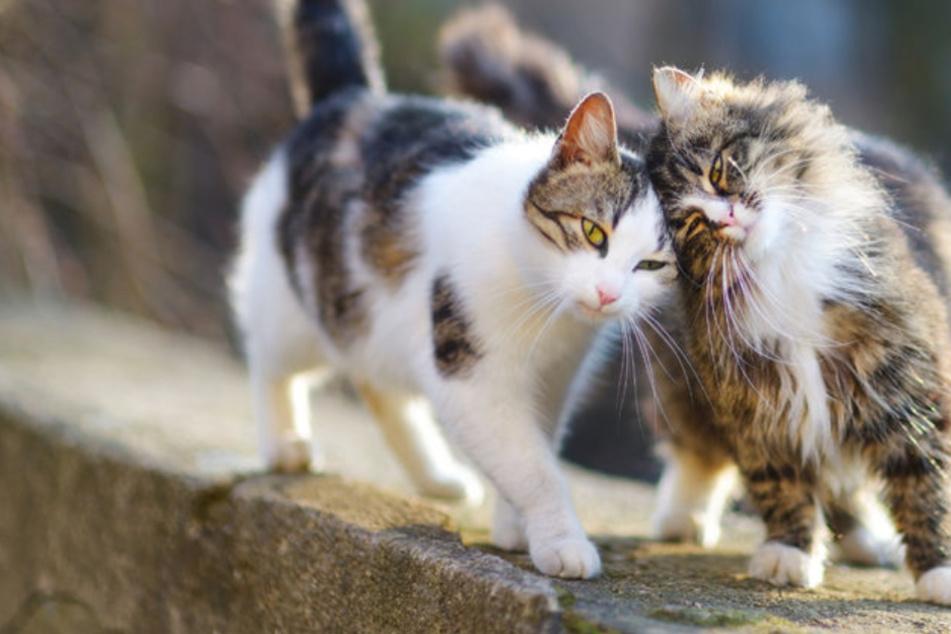 Wer tut sowas? Katzen bei lebendigem Leib verbrannt, ertränkt und begraben