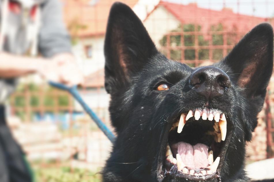 Polizei warnt! Schwarzer Hund fällt Kinder an und verletzt sie schwer