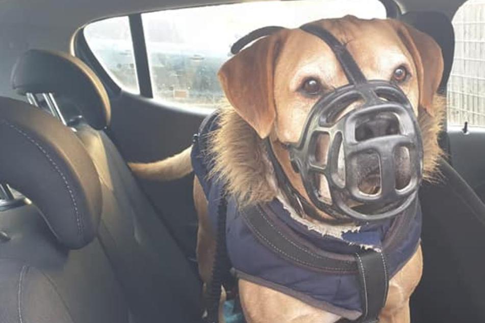 Tierheim-Sorgenkind darf zu seiner großen Liebe ziehen: Das ist der traurige Grund