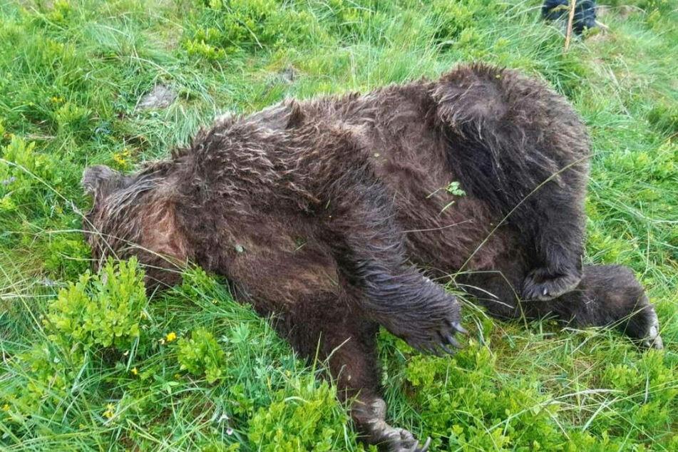 Nach dem gewaltsamen Tod des freilebenden Bären in Südwestfrankreich haben Ermittler eine Autopsie angeordnet.