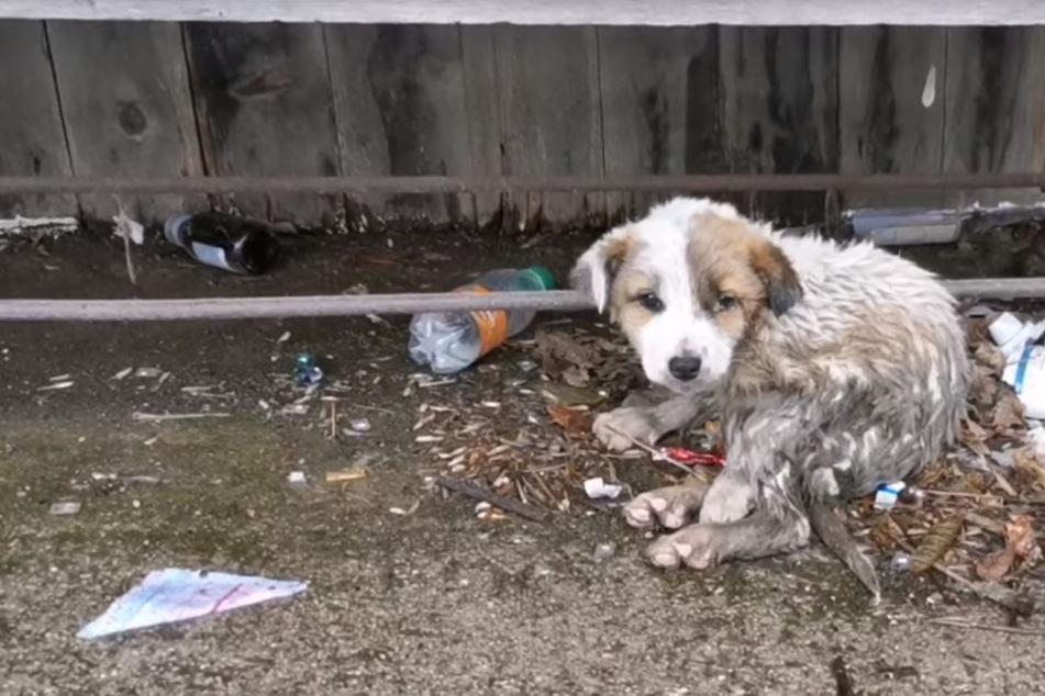 Verstoßener Hund wimmert verzweifelt, doch niemand hilft