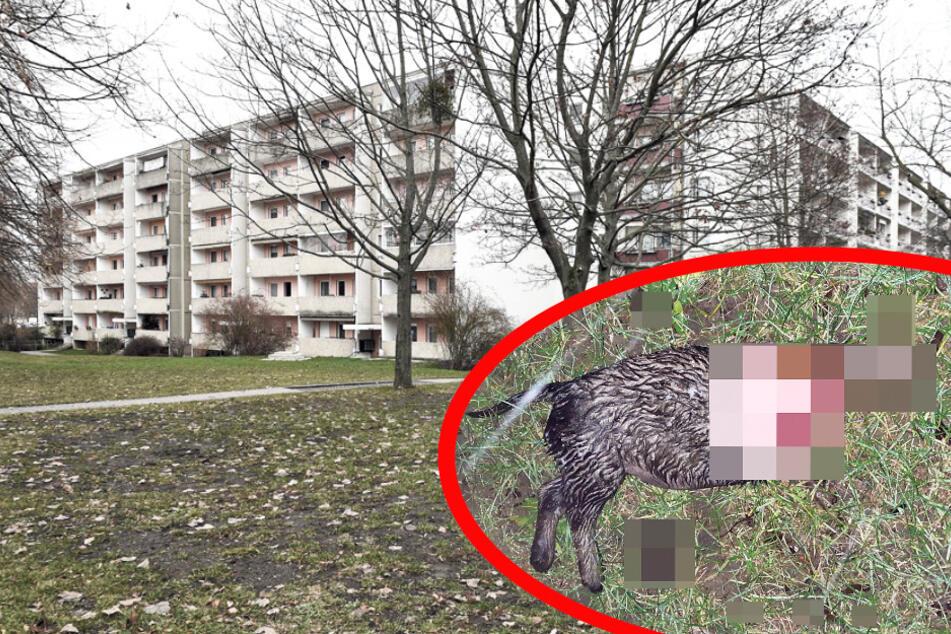 Geköpfter Hund in Dresden: Brutalität ist selbst den Ermittlern neu