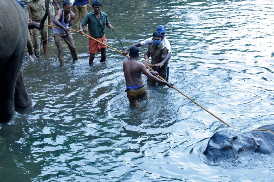 Elefant mit Feuerwerk getötet: Zwei Millionen Menschen reagieren wütend auf die Tat