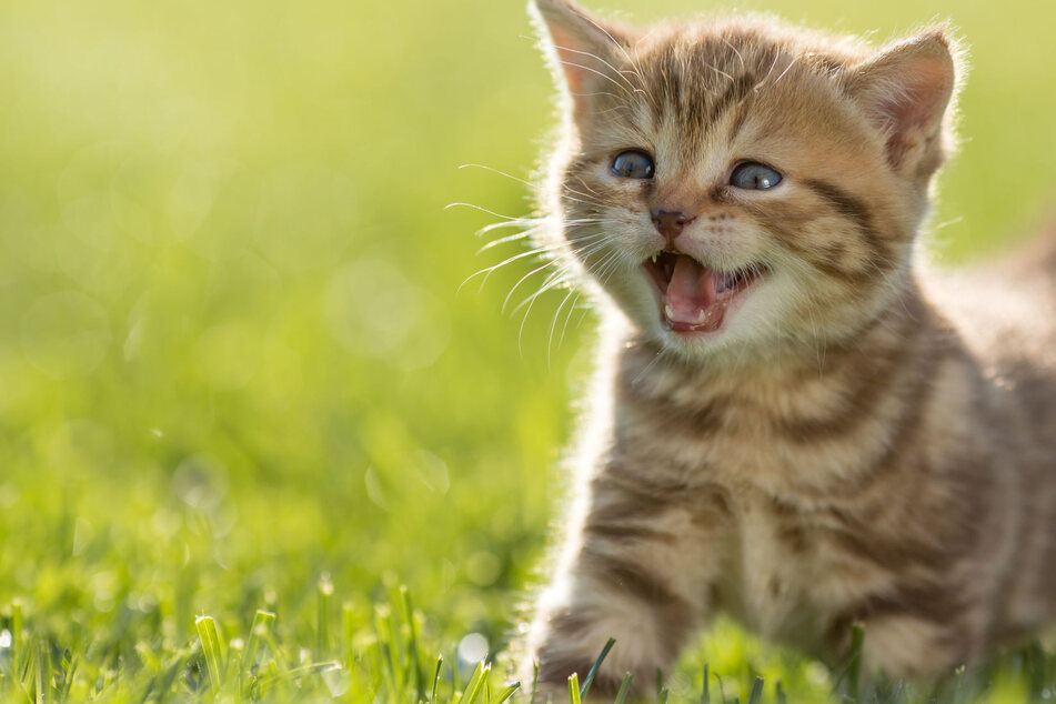 It's National Cat Day – the purr-fect time to celebrate your feline friend!