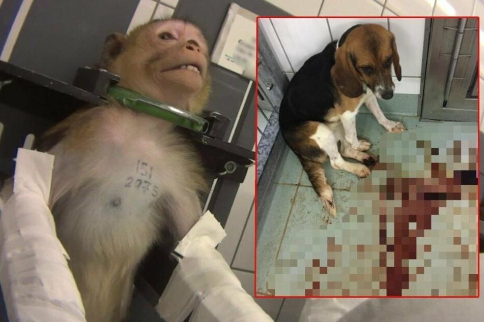 Ehemaliges Tierversuchslabor wird Zentrum für vernachlässigte Hunde!