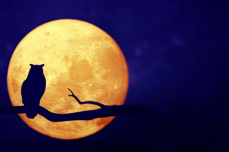 Horoskop heute: Tageshoroskop kostenlos für den 09.09.2020