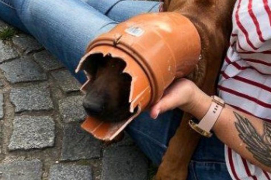 Der Hund steckte in einem Kunststoffrohr fest.