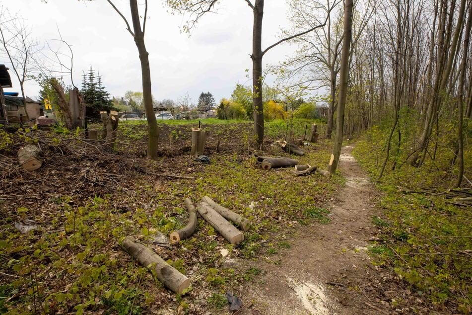 Dresden: Entscheidung wurde eigentlich vertagt: Trotzdem fallen erste Bäume im Leutewitzer Park!