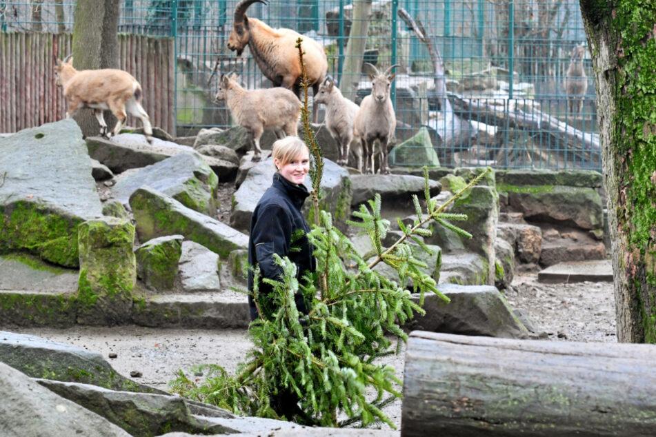 Ä Tännschen please! Großes Reste-Futtern im Zoo