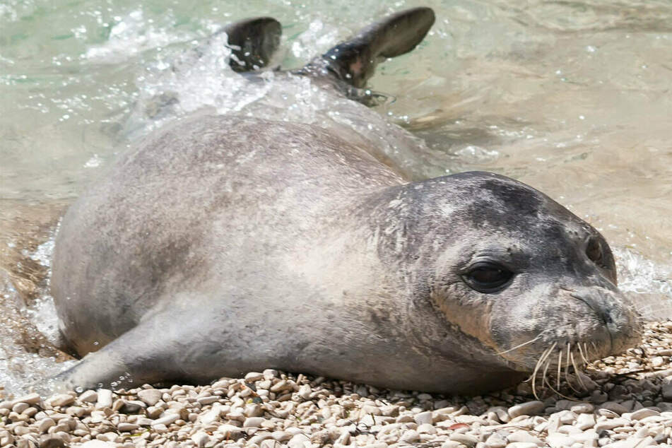 Famous seal found dead as huge reward is offered for killer on the loose