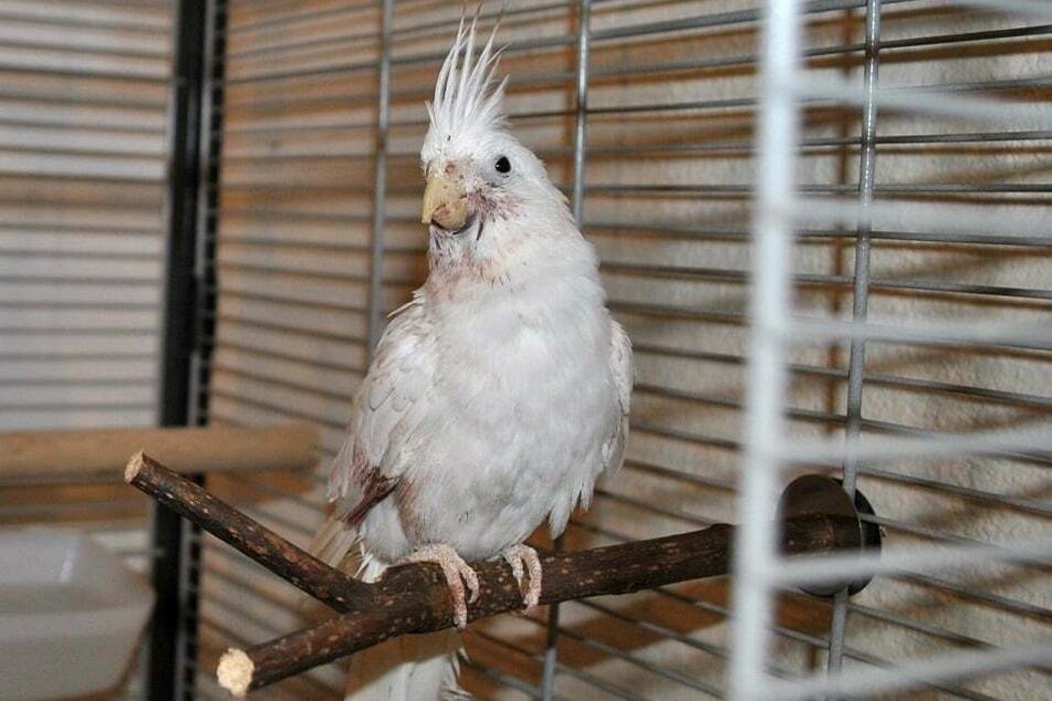 Glenda wartet im Tierheim auf ihre zukünftigen Besitzer.