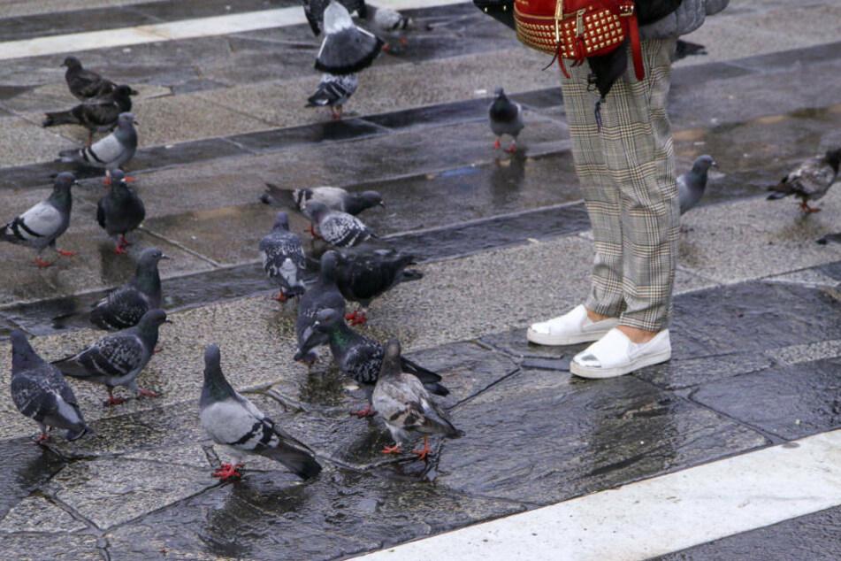 Immer wieder Tauben gefüttert: Dafür sollte Rentnerin 12.000 Euro zahlen