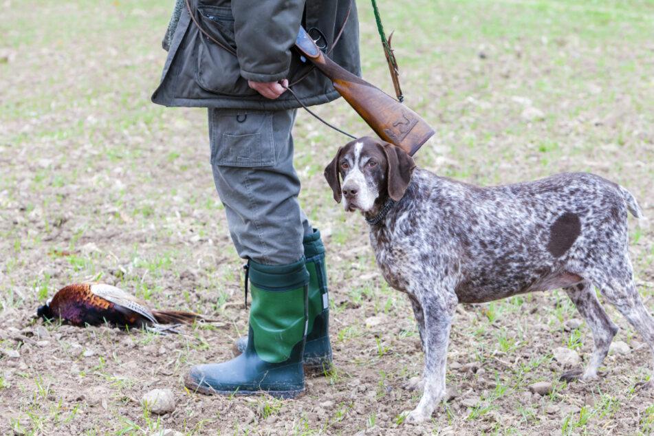 Bei der Jagd auf Wildschweine angesteckt: Killer-Virus tötet Jagdhund