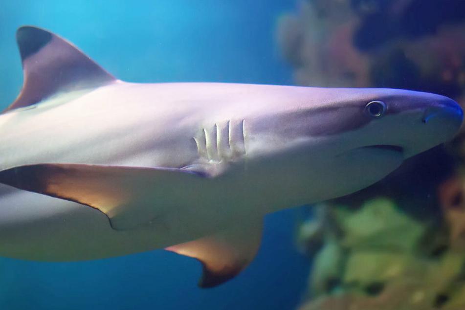 Mann lässt tote Eltern zurück und schwimmt vier Stunden durch ein Haigebiet