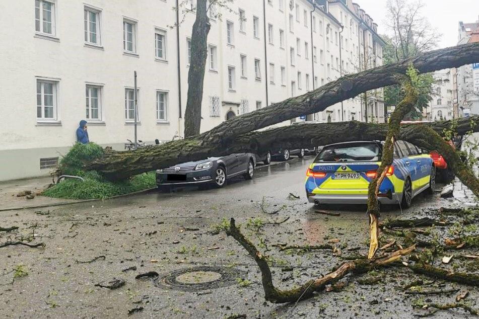 München: Baum kracht auf Streifenwagen! Polizistin von Stromleitung am Kopf getroffen