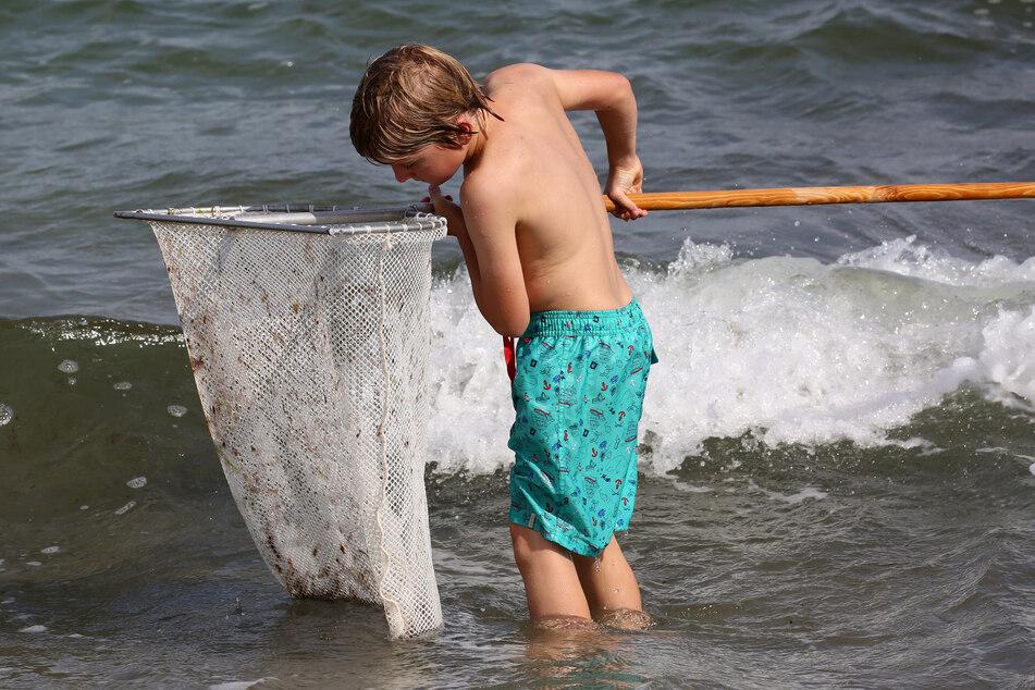 """""""Seit 50 Jahren nicht gegeben"""": Junge macht seltenen Fund auf Urlaubsinsel"""