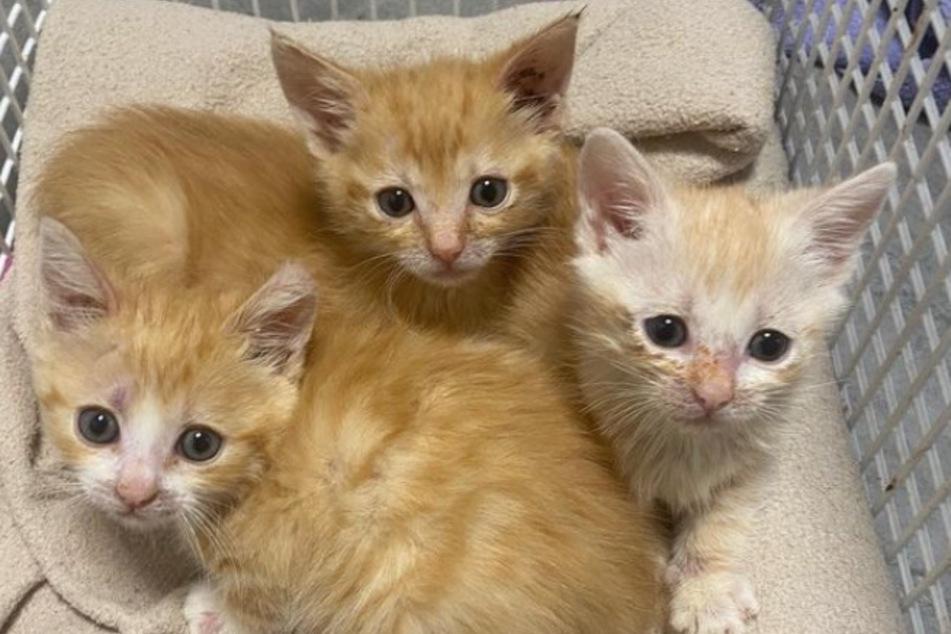 Neben Mülltonne ausgesetzte Babykatzen beweisen echtes Kämpferherz