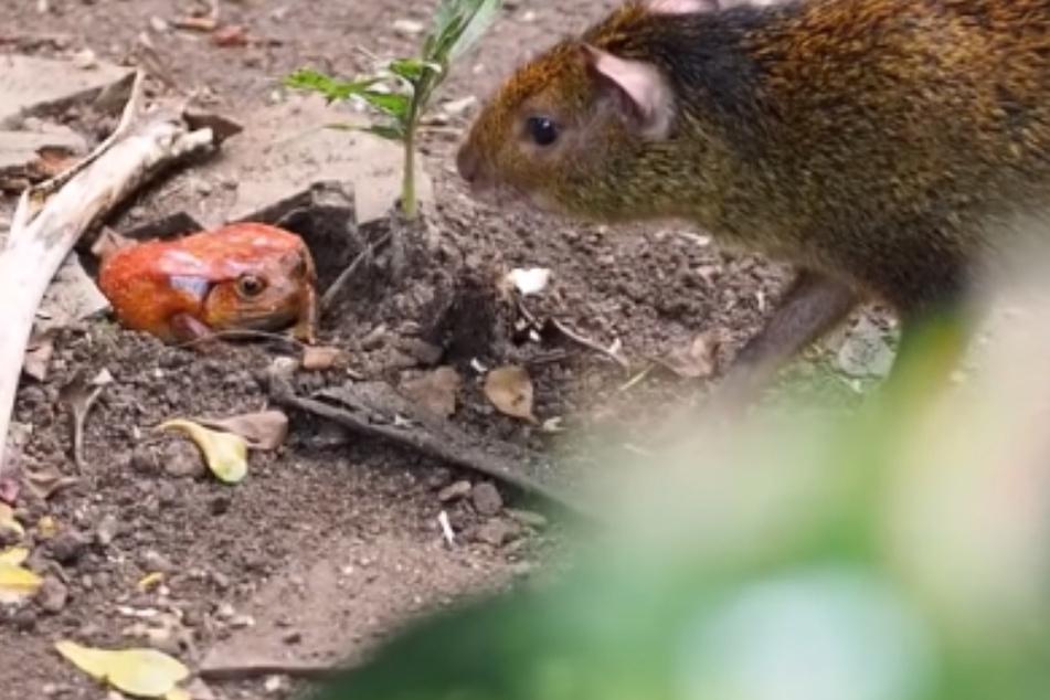 """""""Bizarre Gemeinschaft"""": Diese Tiere sind im Leipziger Zoo in eine WG gezogen"""