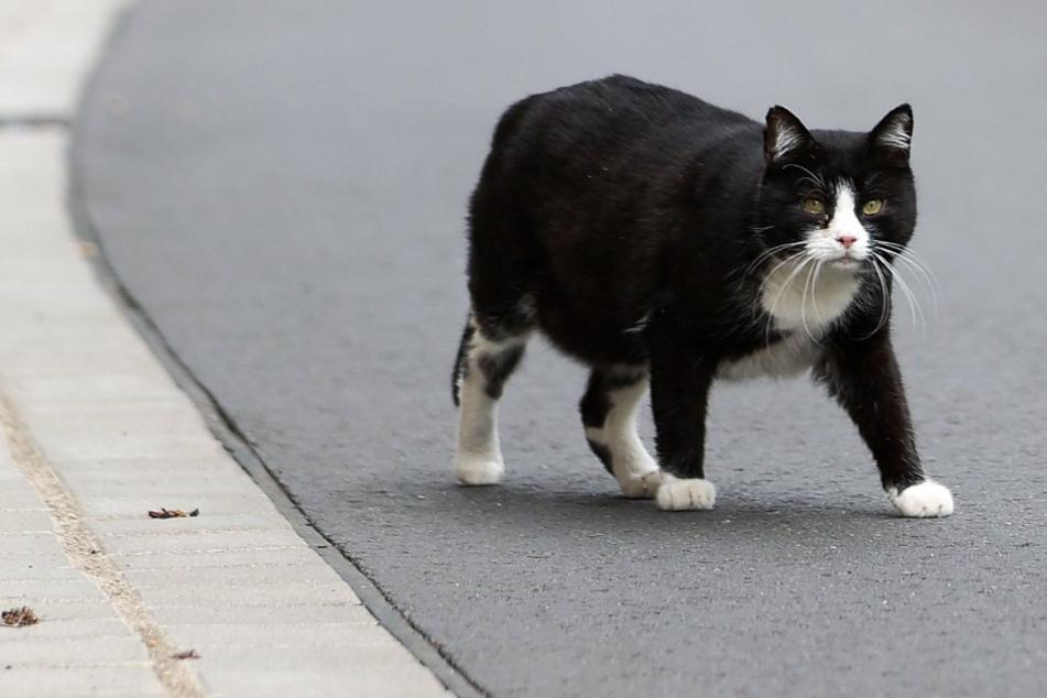 Tierquäler! Katze mit Absicht überfahren