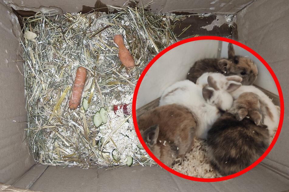 Besitzer legen niedliche Hasen-Kinder in Kiste auf Feldweg ab: Polizei ermittelt!