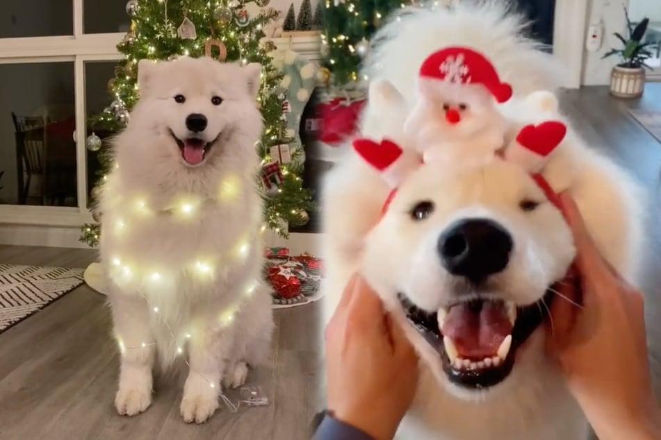 Santa Paws: TikTok loves this dog's Christmas costumes!