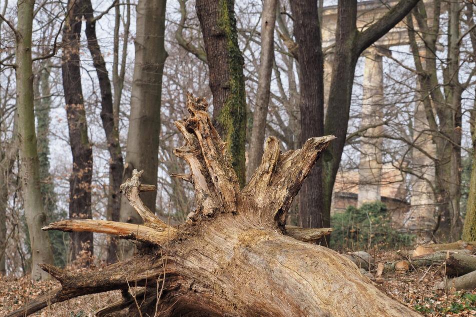 Tragödie beim Spazieren: Baum stürzt auf zwei Frauen