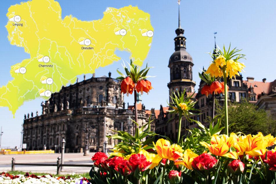 Wetter: So wird der Sommer in Dresden
