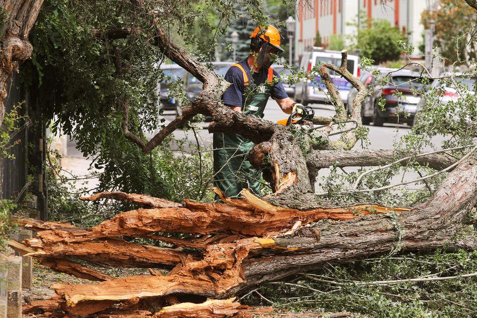Feuerwehrleute zersägten den Baum auf der Böttgerstraße.