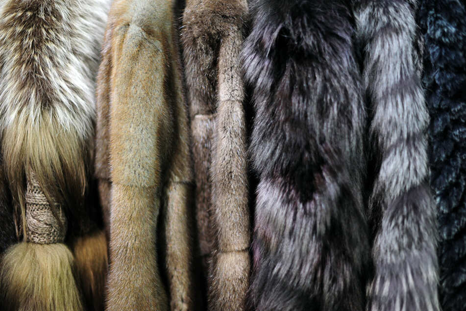 Pelzhändler öffnet Laden trotz Verbots, nun droht ihm ein fettes Bußgeld