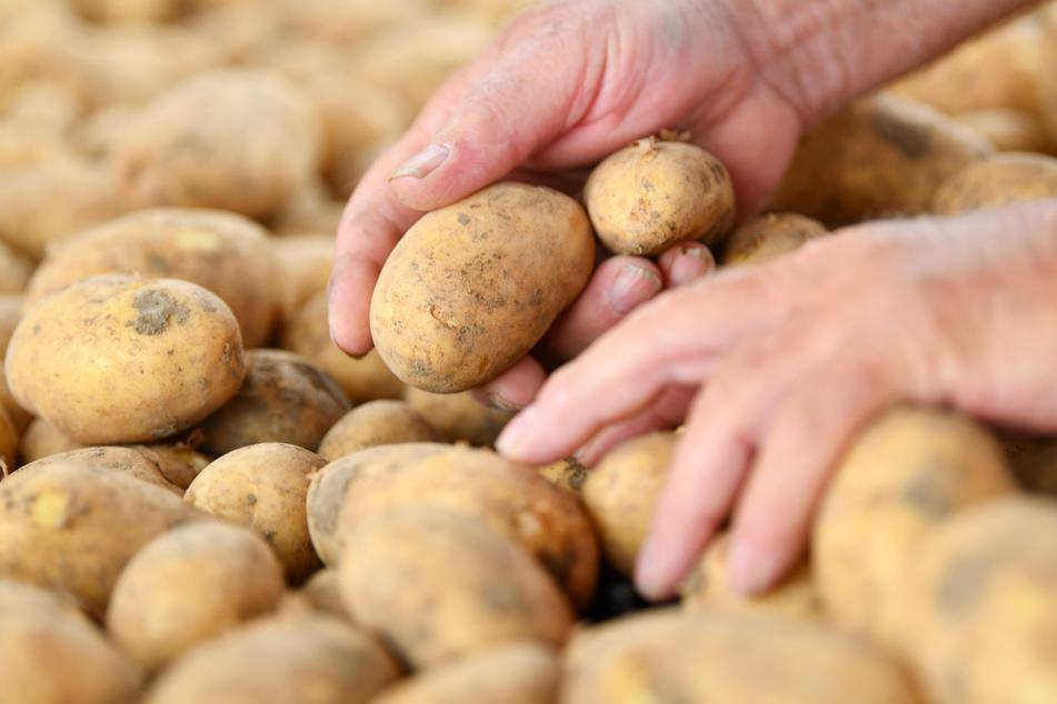 Pro Kopf und Jahr werden rund 55 Kilo Kartoffeln verbraucht. (Symbolbild)
