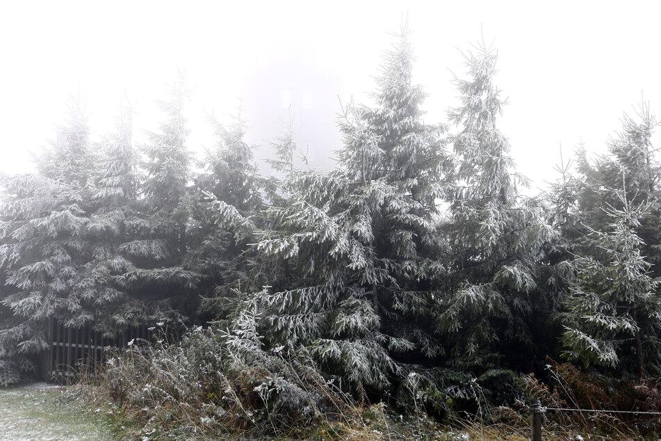 Mit leichtem Schnee waren am Mittwochmorgen die Bäume auf dem Fichtelberg bedeckt.
