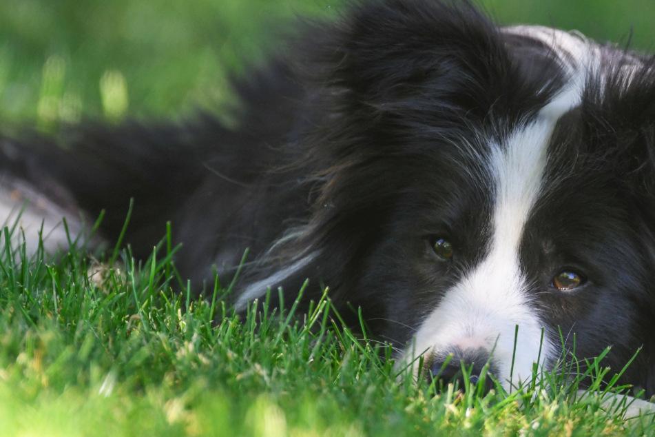 """Hundebesitzer aufgepasst: So werdet Ihr nicht zum """"Todesboten"""" bei jungen Vögeln"""