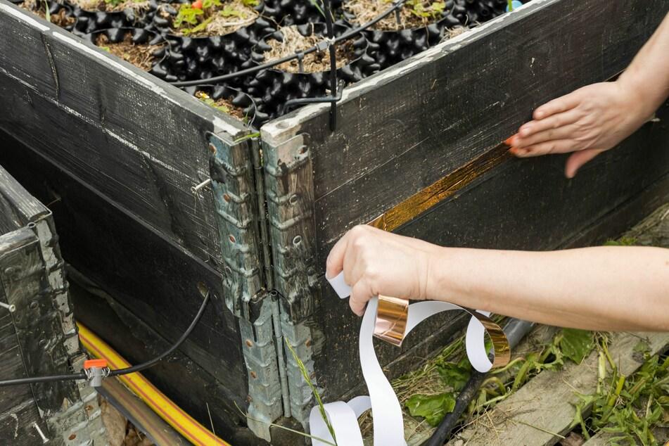 Ein Kupferband am Hochbeet soll Schnecken wirksam fernhalten