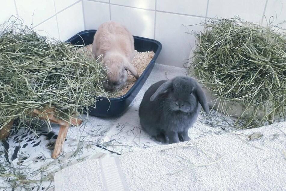 """Dasher und Rudolf stammen aus einer """"Animal Hoarding""""-Wohnung und suchen nun ein liebevolles, artgerechtes Zuhause."""