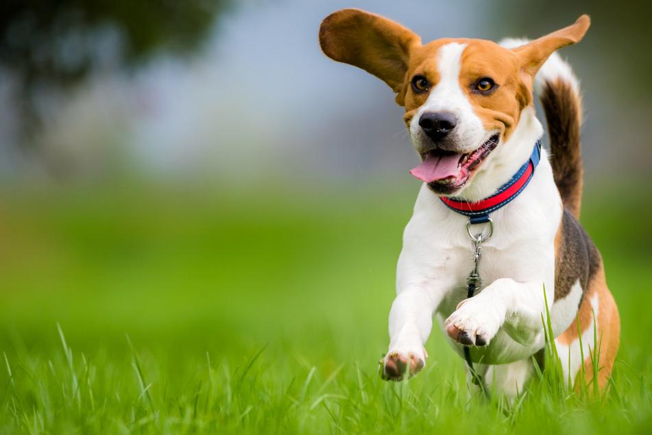 Mit den abgetrennten Wiesen soll Hunden zudem die Möglichkeit gegeben werden, sich natürlich zu verhalten, ohne dass ihre Besitzer Konflikte mit anderen Menschen befürchten müssen. (Symbolbild)