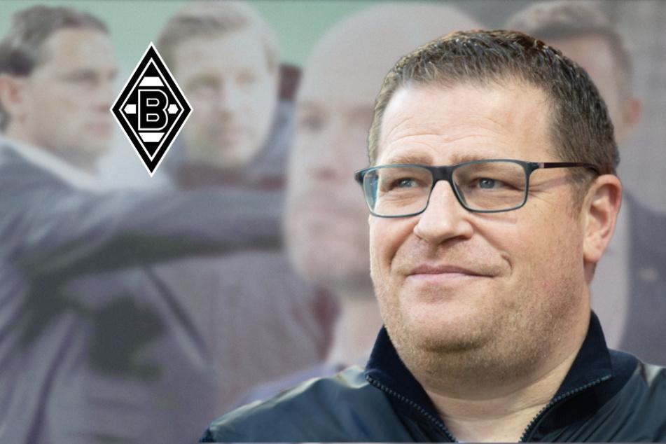 Gladbach sucht neue Rose: Das sind Eberls vier Top-Kandidaten für die Trainerbank!