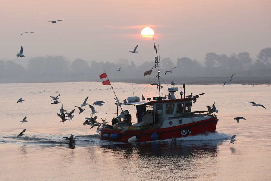In der westlichen Ostsee wurde seit 1982 ein Temperaturanstieg von 0,6 Grad pro Dekade gemessen.
