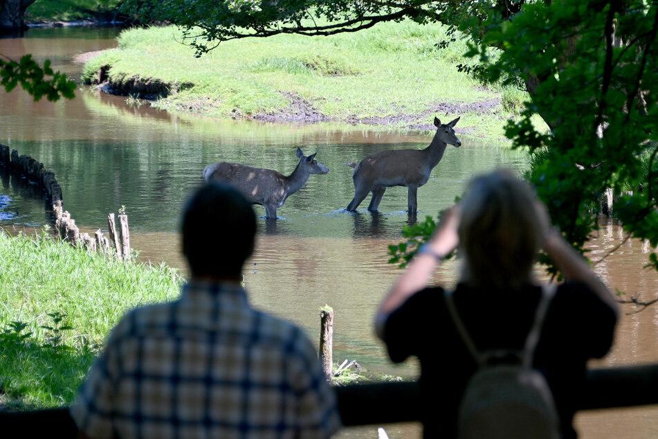Besonders der Wildpark Eeekholt ist bei Hamburgern als Ausflugsziel beliebt. (Archivbild)